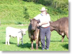 Brian and the cows